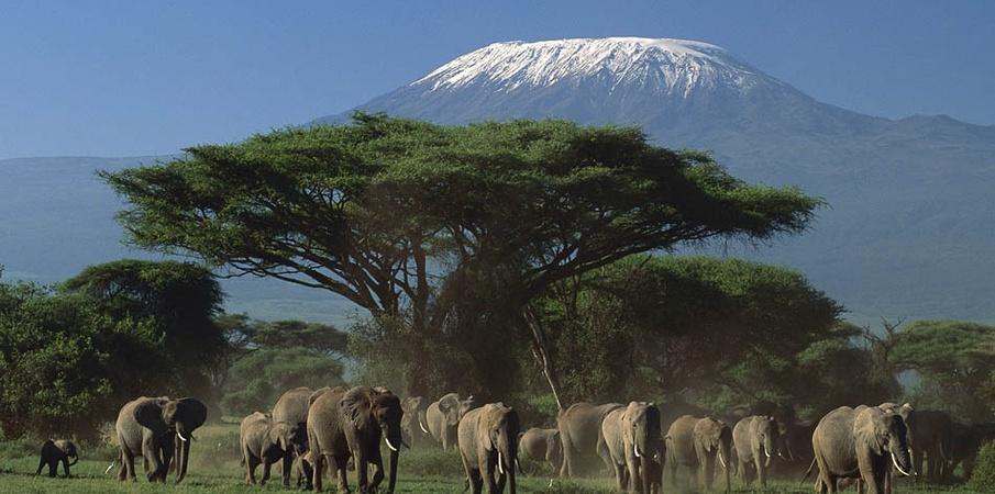 Great_Amboseli