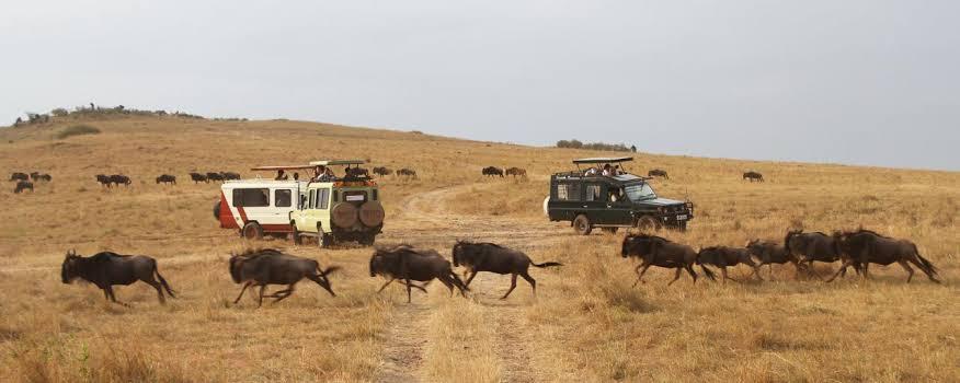 Maasai_mara_6