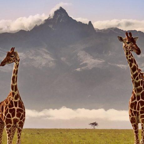 Mount-Kenya-and-Giraffe