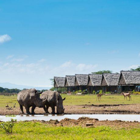 sweetwater-serena-camp-mount-kenya-timbuktu-travel